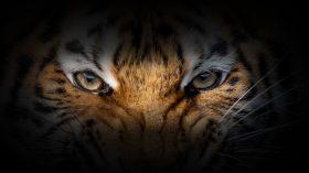 Para o fundo Tiger Global, agora é a hora de atacar